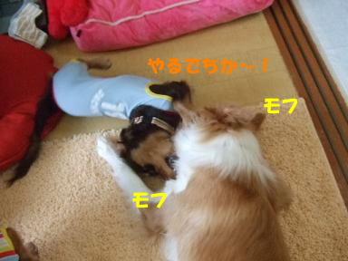 blog070902choro11.jpg