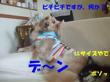 blog070902choro12.jpg
