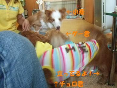 blog070902choro13.jpg