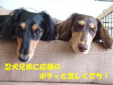 blog070902ninken04.jpg
