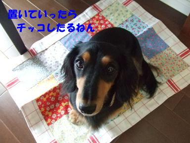 blog070903mizuasobi01.jpg