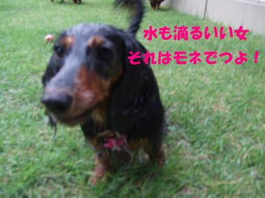 blog070903mizuasobi06.jpg