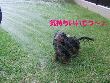 blog070903mizuasobi07.jpg