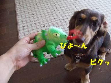 blog070905kame02.jpg
