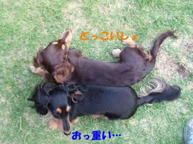 blog070907dou02.jpg