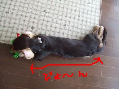 blog070907dou04.jpg