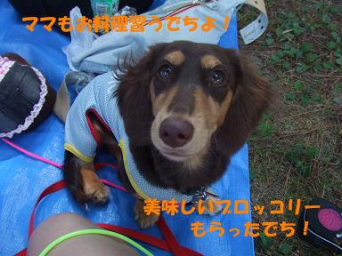 blog070908biwako05.jpg