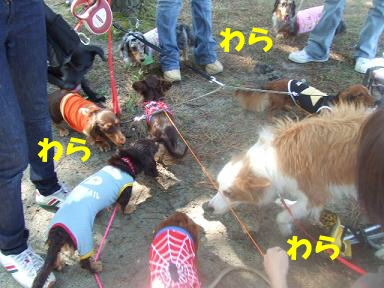 blog070908biwako21.jpg