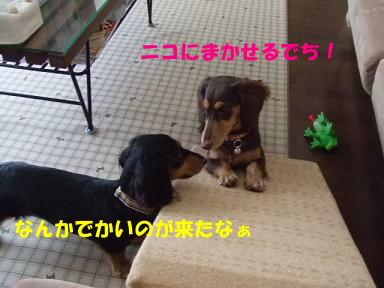blog070909saka02.jpg