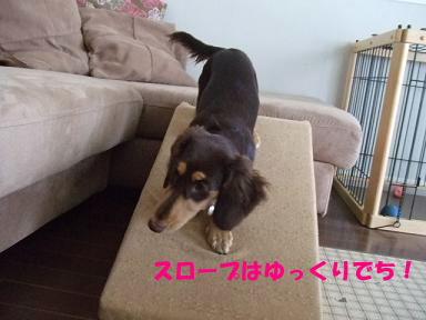 blog070909saka04.jpg