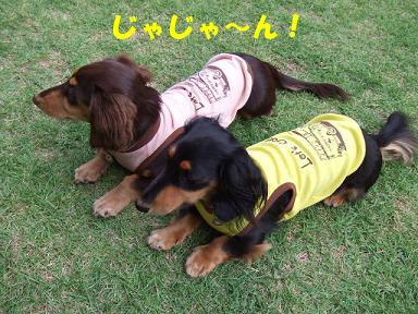 blog070909saka07.jpg