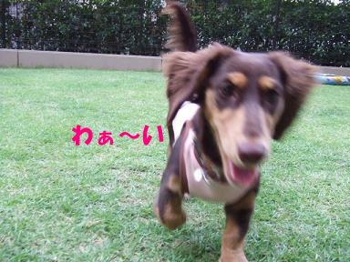 blog070909saka08.jpg