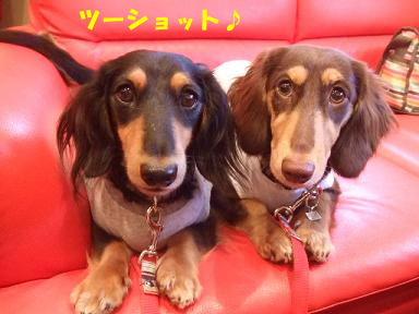 blog070915doyou02.jpg