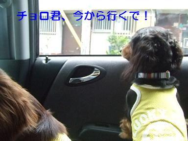 blog070917purin01.jpg