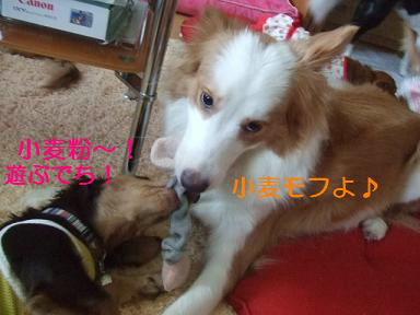 blog070917purin02.jpg