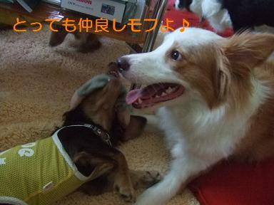 blog070917purin03.jpg
