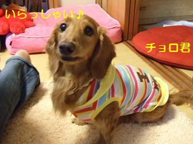 blog070917purin14.jpg