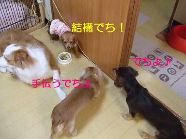 blog070917purin19.jpg