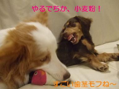 blog070917purin27.jpg