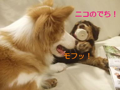 blog070917purin28.jpg