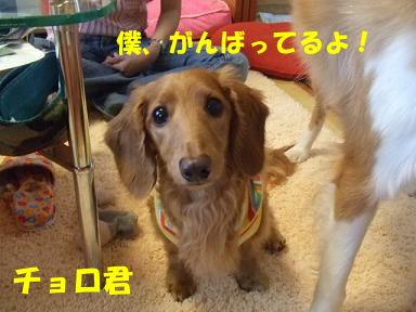 blog070917purin29.jpg