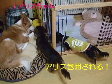 blog070917purin30.jpg