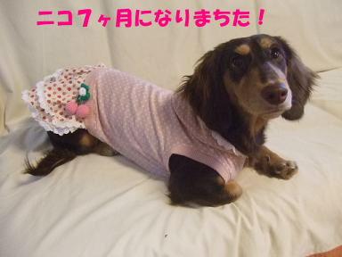 blog070918nico01.jpg