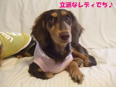 blog070918nico02.jpg