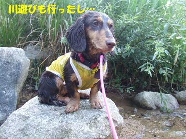 blog070918nico03.jpg