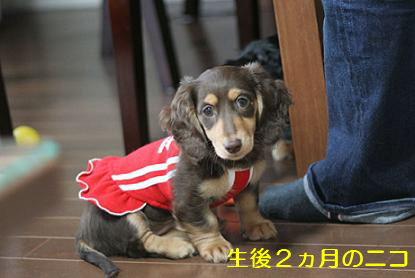blog070918nico06.jpg