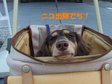 blog070922petto01.jpg