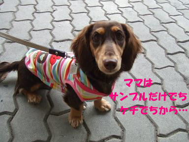blog070922petto12.jpg