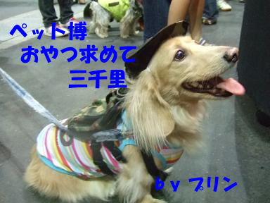 blog070922petto16.jpg