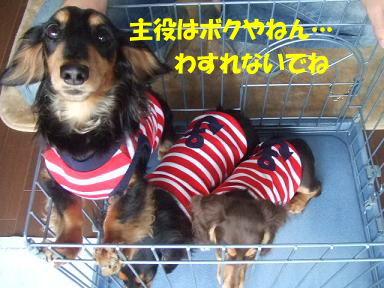 blog100nico03.jpg