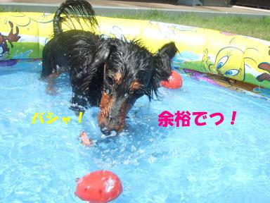 blog20070806pool02.jpg