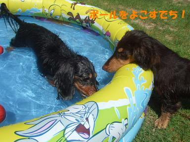 blog20070806pool22.jpg
