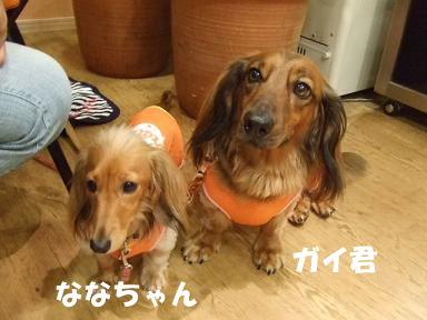blog2honn05.jpg