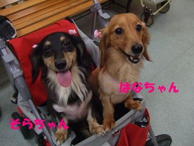 blog2honn06.jpg