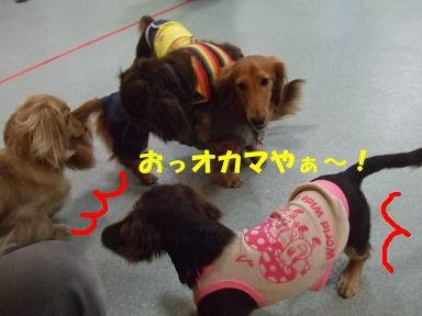 blog2honn10.jpg