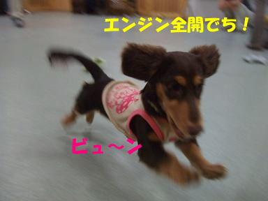 blog2honn13.jpg