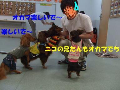 blog2honn14.jpg
