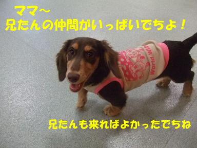 blog2honn22.jpg
