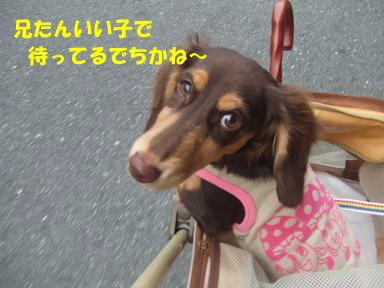 blog2honn25.jpg