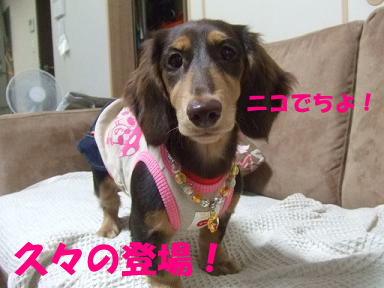 blog2honn26.jpg