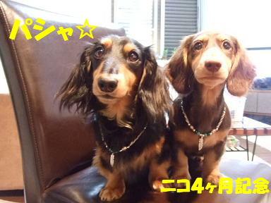 blog4nico04.jpg