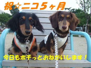 blog5kagetu02.jpg