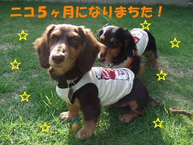blog5kagetu03.jpg