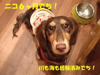 blog6kagetu02.jpg