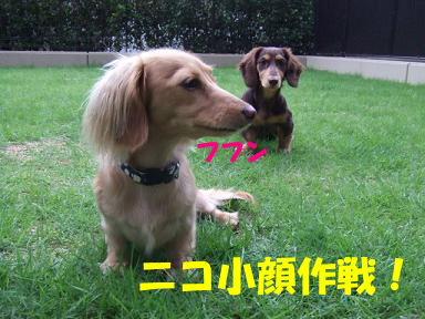 blog716hina03.jpg