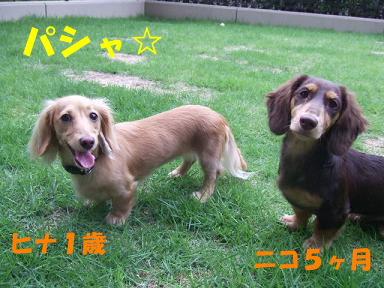 blog716hina04.jpg